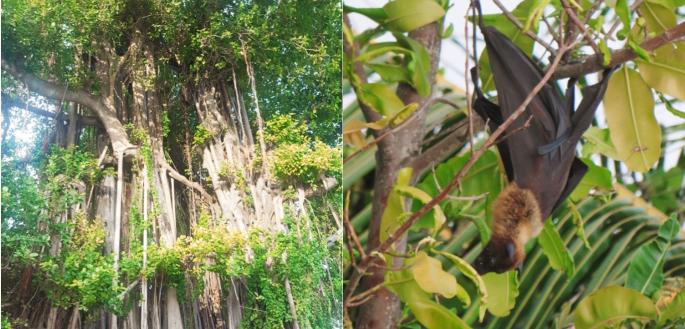 trees and bat
