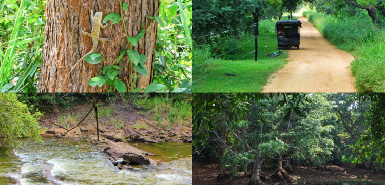a collage of creatures in the jungle: monitor lizards and birds in the forests