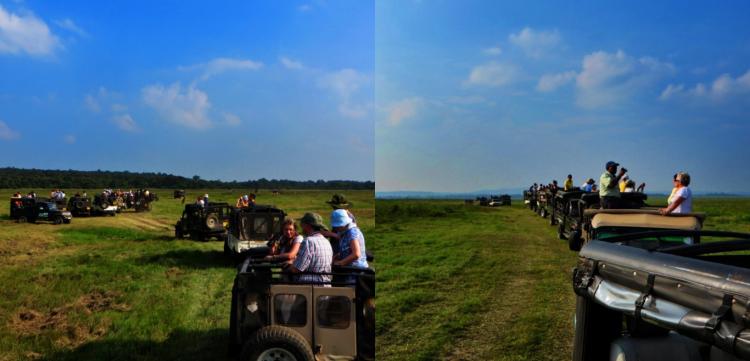 tourists in open jeepneys look for elephants in the fields of Minneriya Park