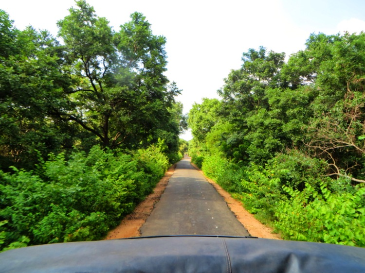 asphalt road in the middle of the jungle