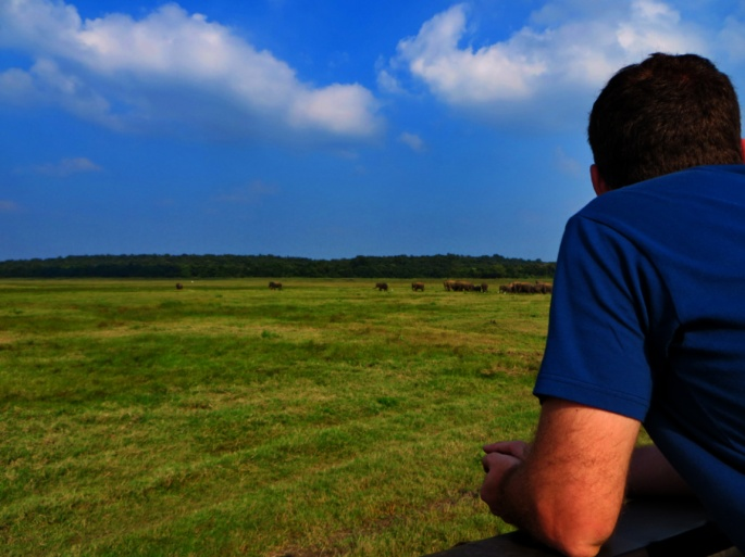 Man looks at the elephants from a distance