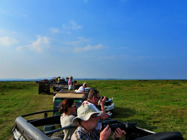 tourists in open jeeps get their cameras out to take photos of elephants