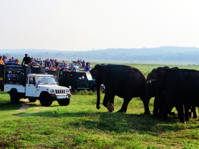 elephants and tourists get too close to each other