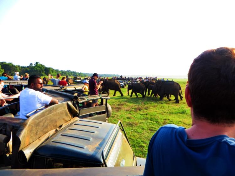 herd of elephants passes between the line of tourists