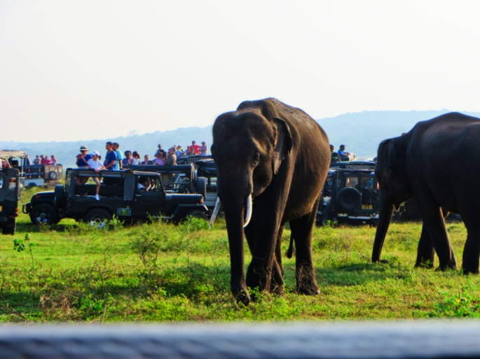 a male elephant starts to the approach the tourists in the park