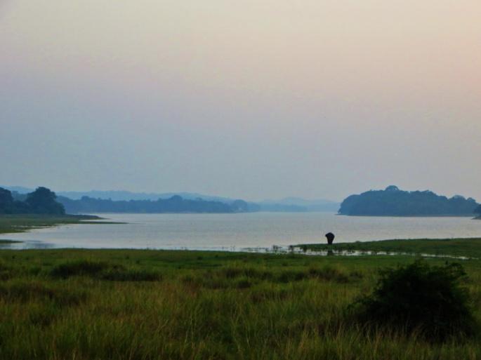 an elephant walks the banks of the Samudra Parakrama at sunset
